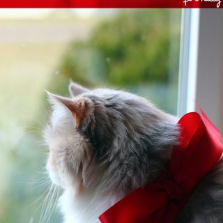 DIY/Holiday | Festive Bow Collar for Kitty
